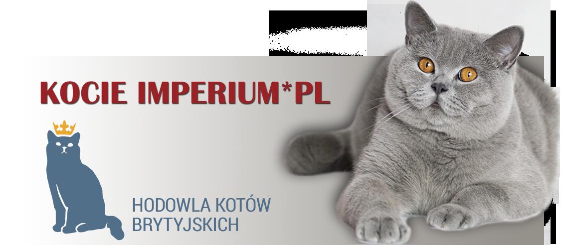 Hodowla Kotów Brytyjskich-Kocie Imperium*PL